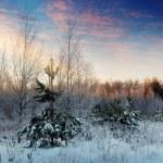 Winter landscape — Stock Photo #38414853