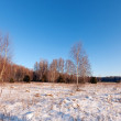 Stock Photo: Russiwintry lanscape with birches