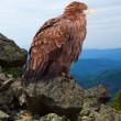 Eagle on rock — Stock Photo #38415333