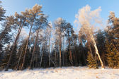 Winter landscape with forest — Stock Photo