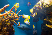 Coral reef area — Stock Photo