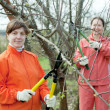 Stock Photo: Two women trimming tree