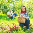 Stock Photo: Family with harvested apples