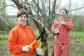 Two women trimming tree — Stock Photo