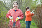 Women cutting shrubbery — Stock Photo