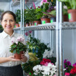 Female florist with Cyclamen plant — Stock Photo