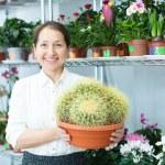Happy florist with cactus — Stock Photo