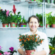 Florist with Calamondin t at flower store — Stock Photo