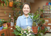 Woman with ficus plant at flower store — Stock Photo