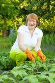 Kobieta pracuje w dziedzinie fasoli — Zdjęcie stockowe