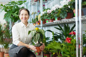 Happy mature woman chooses Aphelandra at shop — Stock Photo