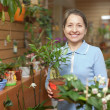 Stock Photo: Womwith ficus plant (Bonsai) in store