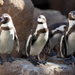 Stock Photo: Few penguins