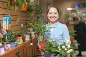 Woman with ficus plant (Bonsai) in store — Stock Photo