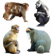 Stock Photo: Set of monkeys. Isolated over white