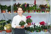 Woman chooses Cyclamen plant — Stock Photo