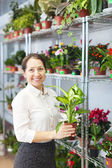 Woman with Dieffenbachia plant — Stock Photo
