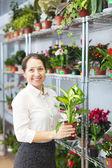 Woman with Dieffenbachia plant — Stock Photo