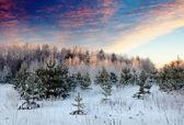 Paesaggio invernale di sunrise — Foto Stock