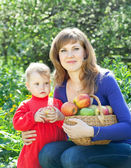 Family with  harvested apples  — Stock Photo