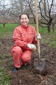 Happy  mature woman planting fruit tree  — Stock Photo