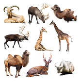 Mammal animals — Stock Photo