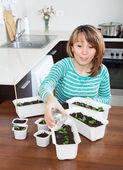 woman in green watering seedlings  — Stock Photo
