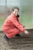Mature woman  sows seeds   — Stock Photo