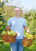 Guy with basket of harvested apples — Stock Photo