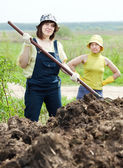Two women works with  manure   — Stock Photo