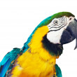 Head of macaw — Stock Photo