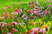 Alpine meadow — Stock Photo