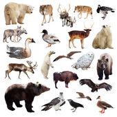 Set of european animals. — 图库照片