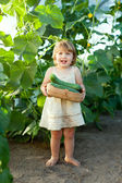 Child picking cucumbers in hothouse — Stock Photo