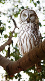 Owl in forest — Stock Photo