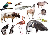 Giant anteater and other animals — Stock Photo