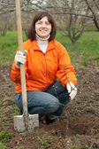 Woman sets tree in garden — Stock Photo