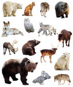 Set of european animals — Stock Photo