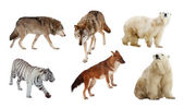 Carnivora mammals — Stock Photo