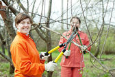Women pruning  tree in  orchard — Stock Photo