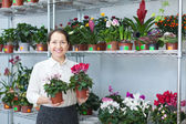 Woman chooses Cyclamen — Stock Photo