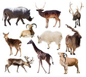 Set of  mammal animals — Stock Photo