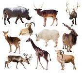 Set of  mammal animals — Stock Photo