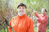 Woman trimming bough — Stock Photo