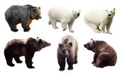Set of polar and brown bears   — 图库照片