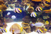 Tropical fish in sea water — Stock Photo