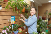 Happy  woman chooses Nepenthes plant — Stock Photo