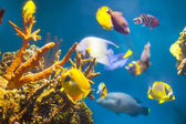 Multicolored tropical fish   — Stock Photo