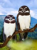 Owls  on tree  — Stock Photo
