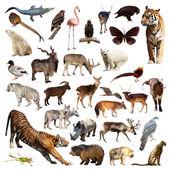 Asian fauna. — Stock Photo